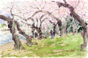 Cherry Blossoms 2014-01