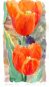2014-05-04 Brookside tulips